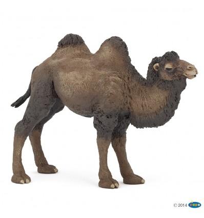 Baktrisches Kamel