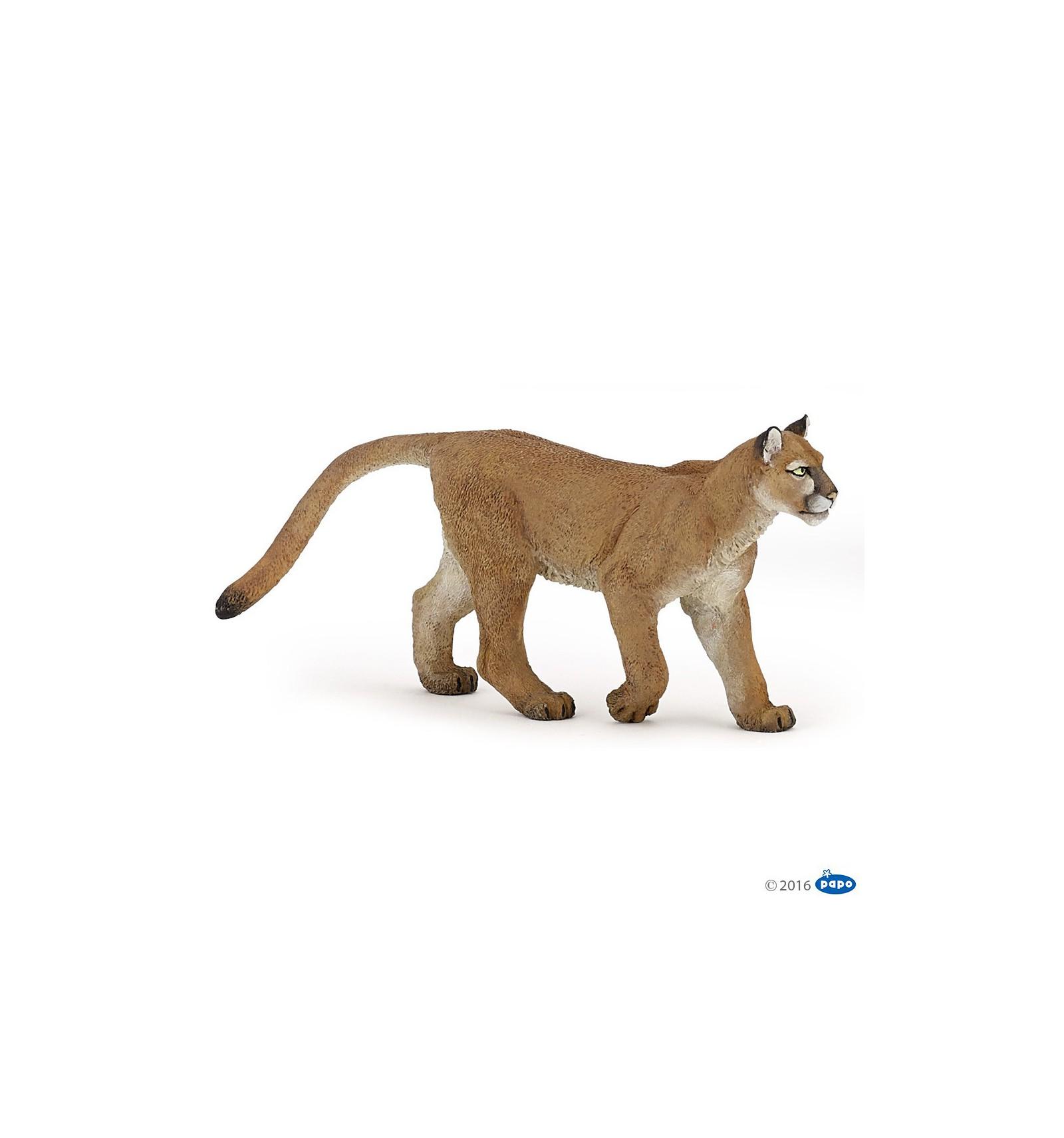 puma animal photo