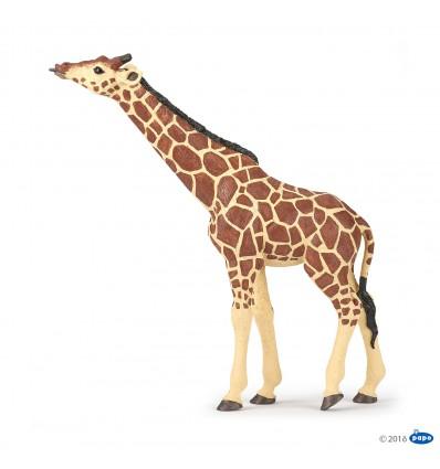 Giraffe mit erhobenem Kopf