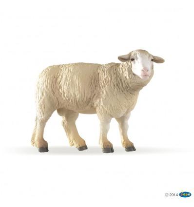 Merinos sheep