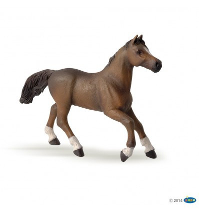 Anglo-Arab mare