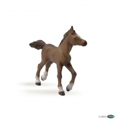 Anglo-Arab foal