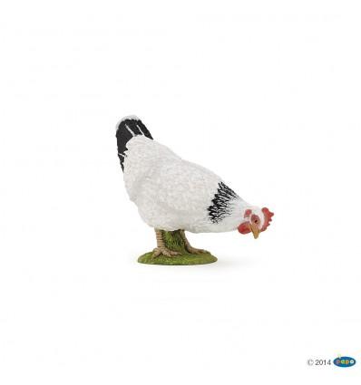 Poule blanche picorant