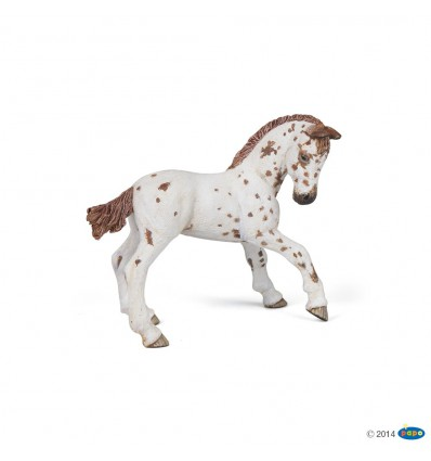 Brown appaloosa foal