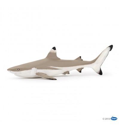 Requin à pointes noires