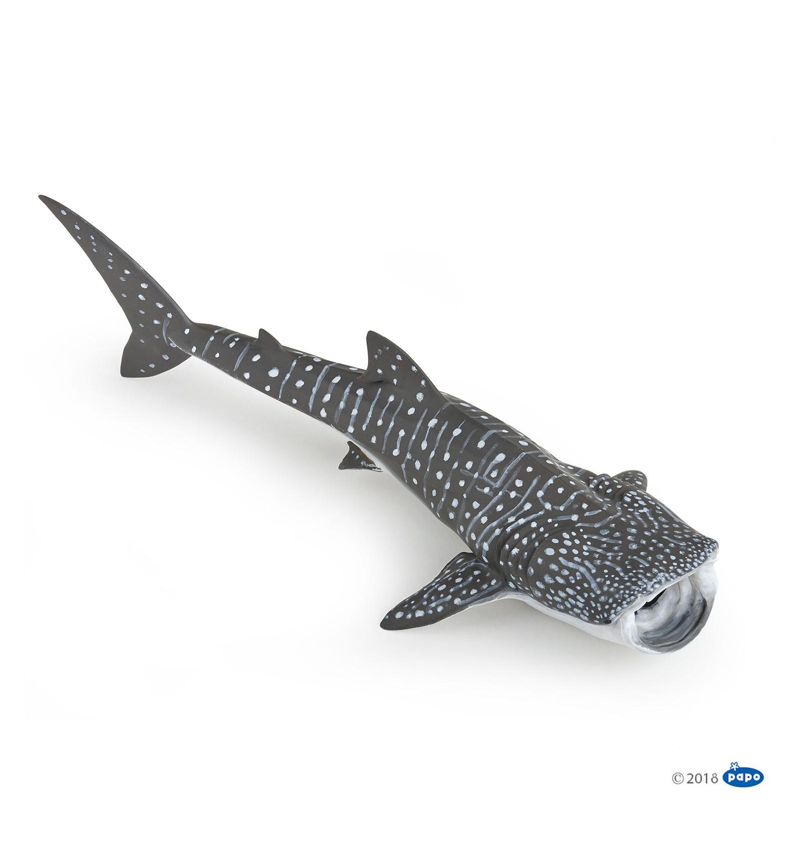 whale shark papo